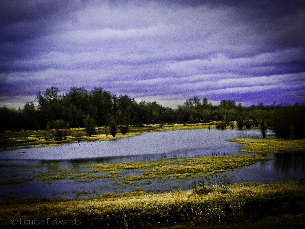 Sauvie Island L Amp L Photography