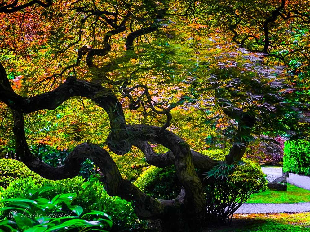 Portland Japanese Gardens L L Photography