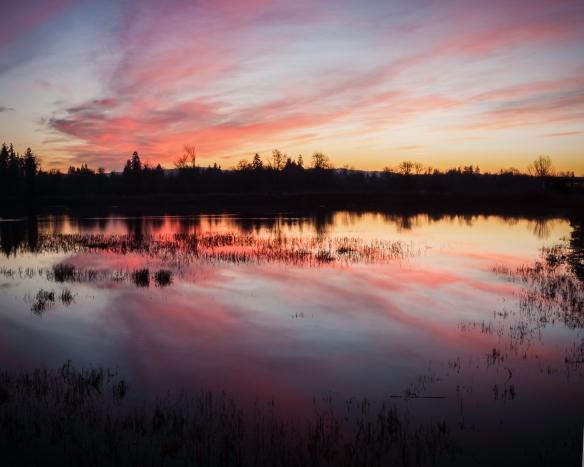 jackson wetland 1
