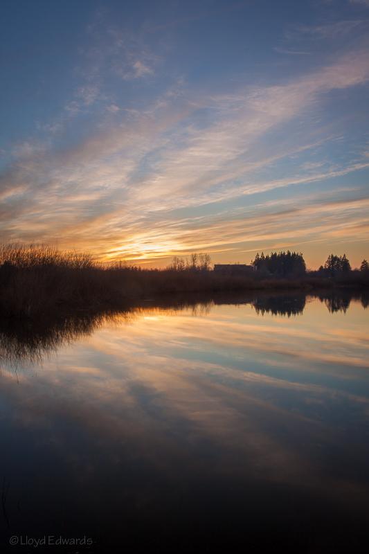 jackson wetland 3_web