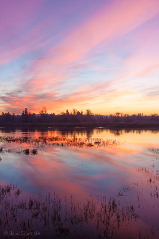 jackson wetland 4_web